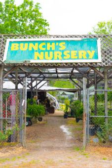 Bunch's Nursery sign above the door to nursery