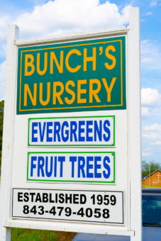 Sign Bunch's Nursery, Evergreens, Fruit Trees, Established 1959, 843-479-4058