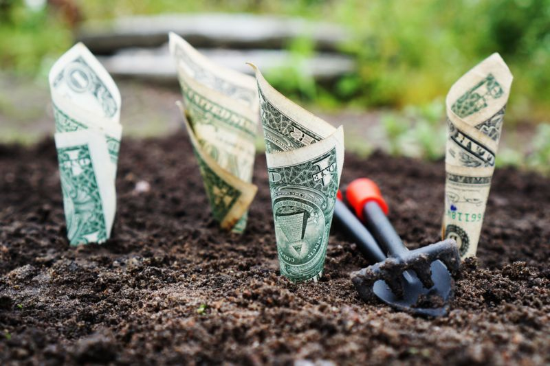 Bank notes planted in soil